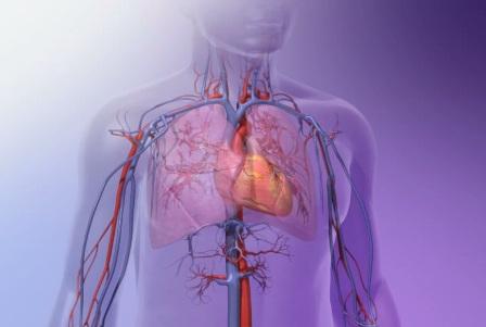 دانلود انیمیشن قلب چگونه کار می کند