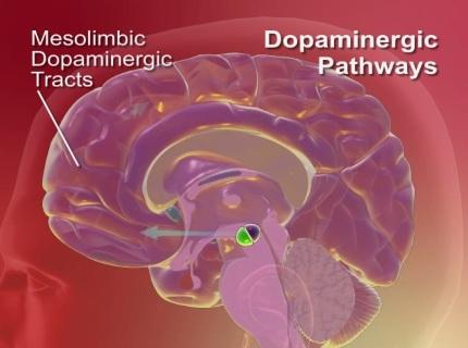 دانلود انیمیشن مسیر دوپامین